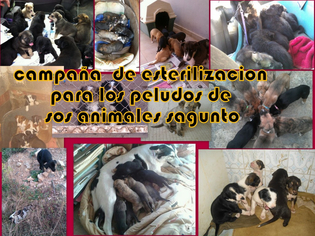 SOS Sagunto | Animales Sagunto