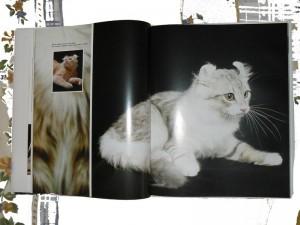 Enciclopedia del gato Protectora SOS Sagunto 3