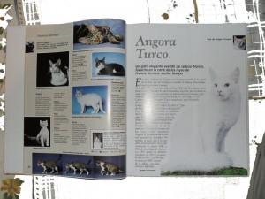 Enciclopedia del gato Protectora SOS Sagunto 5