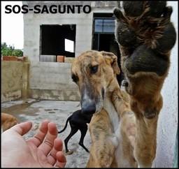 Protectora de animales SOS Sagunto