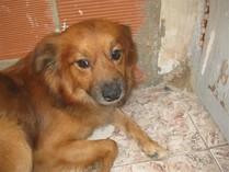 Astor adoptado