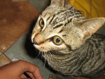 WC gato adoptado