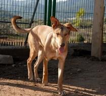 Gruñón, perro en adopción