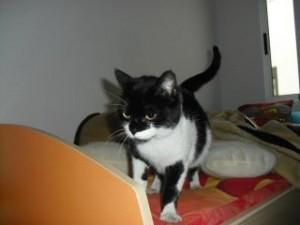 hembras en adopcion gatos