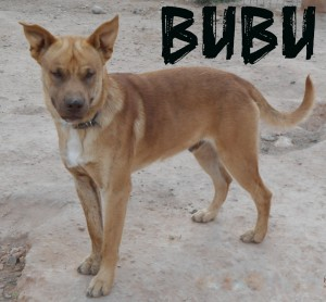 Machos en adopción bubu