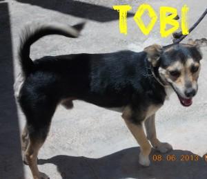 Machos en adopción tobi II