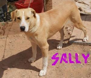 Hembras en adopción Sally