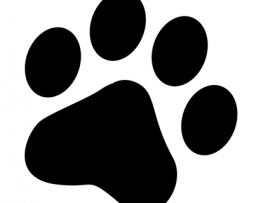 Para mascotas