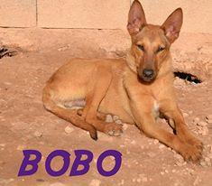 3-BOBO FACE